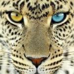 PantherFX