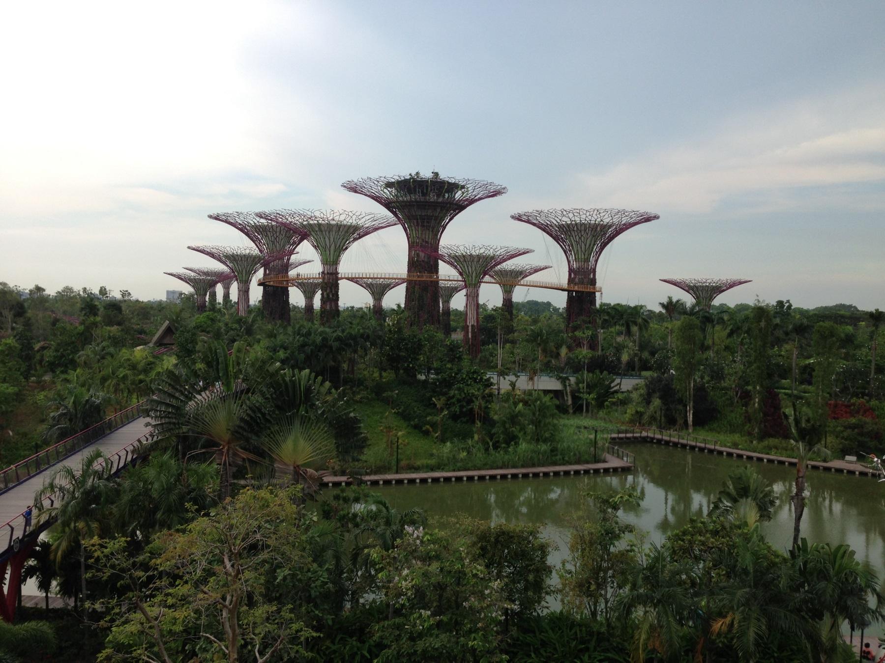 сингапур деревья