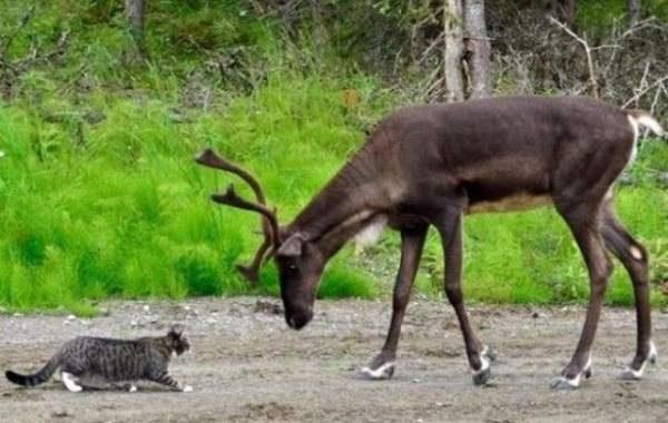Форекс Конкурс Охота на Лося