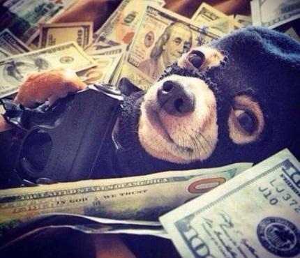 forex ultra filter money management