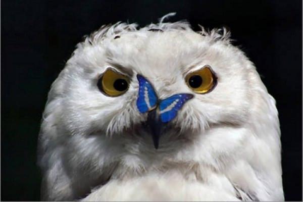 Форекс советник Night Owl скачать