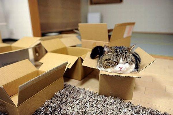 Форекс стратегия кот шредингера