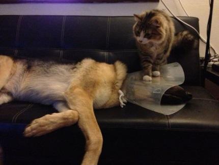 Для чего смотреть котировки на выходных