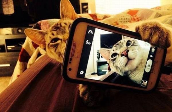 Как подключаться к впс со смартфона